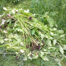 "Some of the Balsam ""Bashed"""